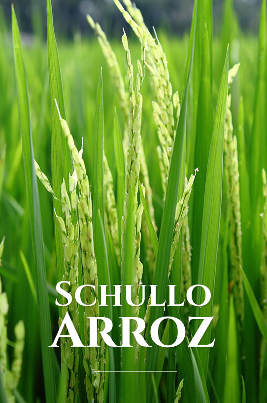 Schullo Arroz